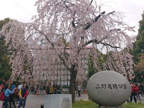 上野の桜@3月28日